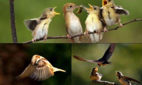 Chim bay vào nhà là điềm báo tốt hay xấu? Con số may mắn liên quan